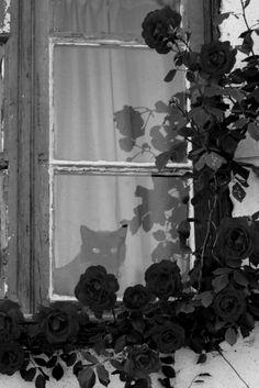 A la fenêtre.