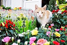 My constant battle......10 Cat Repellents: How to Keep Cats Away From Your Yard