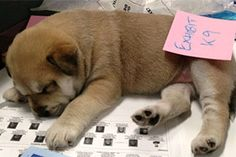 Police pluck puppy from pound