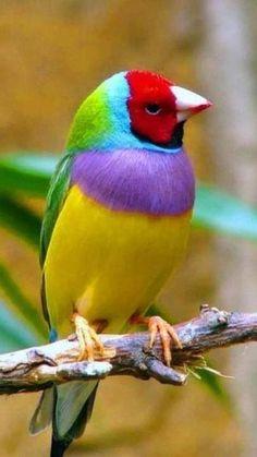 Pretty Birds, Beautiful Birds, Animals Beautiful, Cute Animals, Small Animals, Exotic Birds, Colorful Birds, Exotic Pets, Tropical Birds
