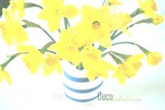 House plants daffodils cut flowers