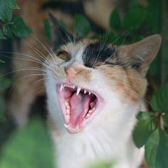 Cat Animals Random #Behaviour - More about Cat Behaviour at Catsincare.com!