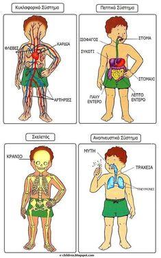 the body in Greek Science Classroom, Teaching Science, Science For Kids, Science And Nature, Teaching Kids, The Human Body, Human Body Unit, Montessori Activities, Kindergarten Activities