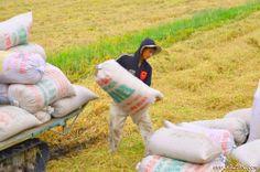 Hạ lãi suất người nông dân phải làm gì? ------------------------ Lãi suất cho vay nông nghiệp hạ xuống 8%/năm, đặc biệt cho vay tạm trữ lúa gạo chỉ còn 7%/năm được đánh giá là rất kịp thời, tạo thêm động l...