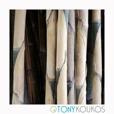 World Travel Photography Bamboo Leaves, Bamboo Palm, Art Photography, Travel Photography, Banana Palm, Orchid Plants, Palm Trees, Islands, Thailand