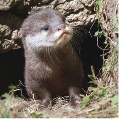 Love otters!
