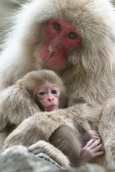 Mother and Baby by Masashi Mochida - Photo 146107197 - 500px