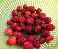 de vrolijke tuinier - zelf aardbeien planten foto aardbeienoogst