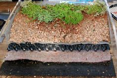 green roof section