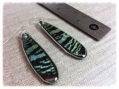Real Butterfly Jewelry Real Butterfly Earrings butterfly