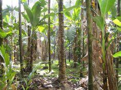 Spicefarm Goa