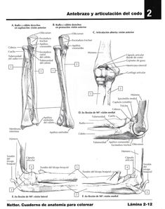 Para colorear sistema esquelético |Miranda Fisioterapia blog Study, Blog, Physical Therapy, Med School, Skeletal System, Muscular System, How To Study, Social Science, Free Coloring