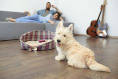 Whether you prefer wood floors, laminate, or carpet we can help you choose the best pet-friendly flooring options for your home.