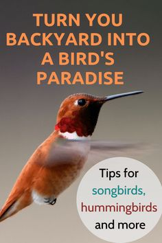 Turn your yard into a bird paradise with these simple strategies for bringing in tons of species.  Year round bird watching with tips on food, water, shelter, placement and how to keep them happy.  #birdwatchingathome #backyardbirds #hummingbirds #birdsallyear #songbirds