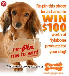 Follow #Nylabone and #Repin with #NylabonePin2Win! #Sweepstakes #Dogs www.nylabone.com/pinterest-sweepstakes.htm