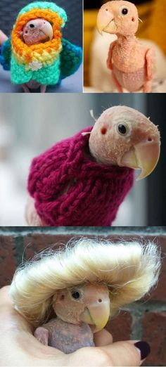 Cute Naked Bird Dressed In Tiny Knitted Jumpers Becomes Famous Instagram Star With 120,000 Followers #bird #birds #cute