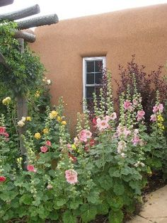 hollyhocks growing against an adobe wall.New Mexico memories! New Mexico Style, Taos New Mexico, New Mexico Homes, High Desert Landscaping, Front Yard Landscaping, Farmhouse Landscaping, Landscaping Ideas, Drought Tolerant Garden, Santa Fe Style