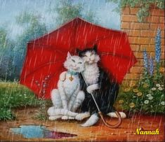 Rain Humor, Umbrella Art, Beautiful Gif, Dancing In The Rain, Cat Drawing, Rainy Days, Cat Art, Pet Birds, Cute Wallpapers