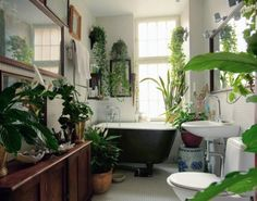 A jungle in the bathroom.
