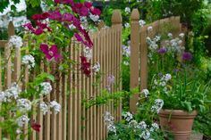 Our picket fence covered in a red Clematis 'Earnest Markham' and heavenly-scented phlox. Allium 'Purple Sensation' on the steps.