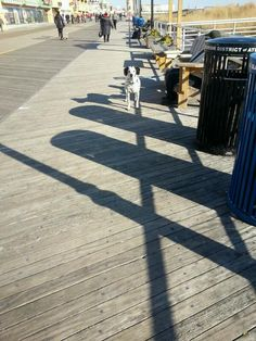 DOG / ATLANTIC CITY BOARDWALK