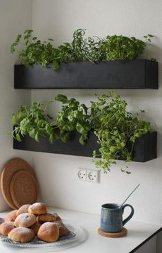 Black and basic wall boxes are an ideal option for growing herbs indoors within easy reach of your kitchen and preparation surface. Grow your own herbs all year long in a well-lit area saving you money at the market and keeping your space green and happy! Herb Garden In Kitchen, Kitchen Herbs, New Kitchen, Happy Kitchen, Plants In Kitchen, Kitchen Small, Wall Herb Garden Indoor, Herbs Garden, Kitchen Ideas