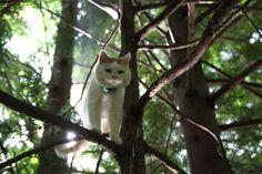 Shiro, 2012.09.13 きのうえで @shironeko_1