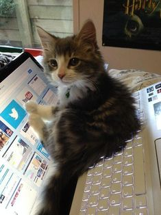 Funny pictures about Kitten's Best Place To Lay Down. Oh, and cool pics about Kitten's Best Place To Lay Down. Also, Kitten's Best Place To Lay Down photos. Cute Baby Animals, Animals And Pets, Funny Animals, Cute Kittens, Cats And Kittens, Tabby Cats, Funny Cat Pictures, Animal Pictures, Funny Images