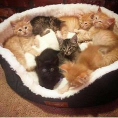 That's a lot of cuteness in one kitty bed ❤️