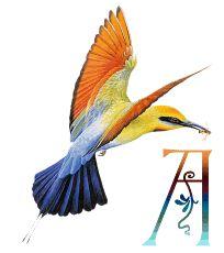 oiseaux-49867-1.gif