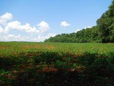 86+/- Acres  Prime Development Property  Madison County, Alabama Located at: 631 Bo Howard Drive, Toney, Alabama