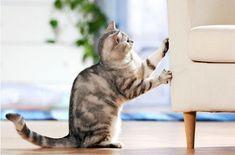 Умелая хозяйка обновила испорченный котом угол дивана, превратив его в произведение искусства | Нескучный дизайн интерьера | Яндекс Дзен