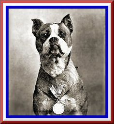 StubbyDog: News & Views - The first decorated canine war hero and the only dog to be promoted to sergeant was pit bull-type dog named Stubby