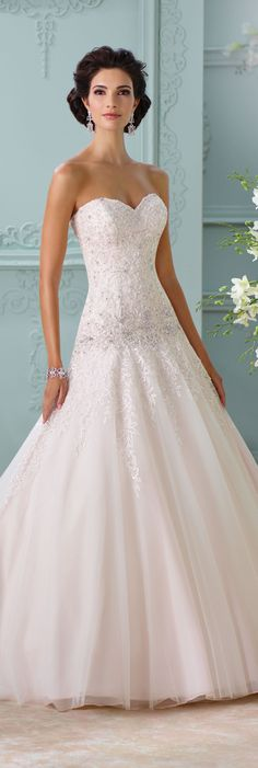 Wedding Dresses David Tutera Spring And Gowns