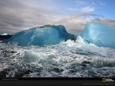 National Geographic - Blue Iceberg: Chinstrap penguins (Pygoscelis antarctica) ride out high surf on blue-ice icebergs near Candlemas Island in the South Sandwich Islands. National Geographic Fotos, National Geographic Wallpaper, Earth Photos, Nature Photos, Hintergrundbilder Hd 1920x1080, 1366x768 Wallpaper, Amazing Places On Earth, Image Nature, Mother Nature