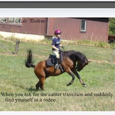 Or when you ask for extended trot, collected trot, trot, halt, walk, or turn on Reuben! But of course not the canter...