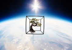 'Shiki' Is A Space-Travelling Bonsai Tree - #Art, #AzumaMakoto, #Bonsai, #JPAerospace, #Nevada, #Space, #Trees
