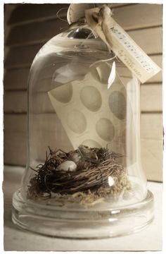Cloche & Bird Nest