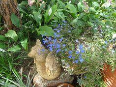 28 Beste Afbeeldingen Van Edna Walling S Gardens Tuin 400 x 300