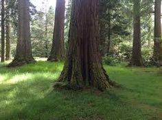 tronco= tree trunk
