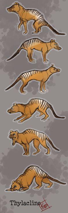 Thylacine by Wulfgnar