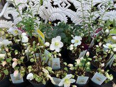 An urban oasis for all your gardening needs. Christmas Rose, Flower Pots, Flowers, Garden, Plants, Flower Vases, Plant Pots, Garten, Lawn And Garden