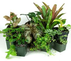Safe Plants for Your Pets, reptiles and amphibians.