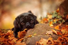 to fall in love by Sabrina on 500px