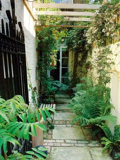 Landscaping Ideas for Skinny Yards and Garden Spaces : HGTV Gardens. Shaded Garden Space Ideal for Feathery Ferns