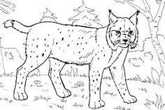 Die 17 Besten Bilder Von Luchs Big Cats Gatos Und Lynx