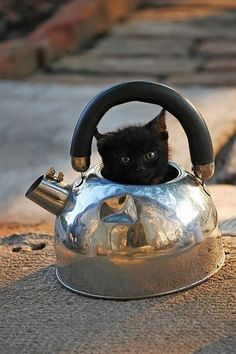 """miezekatzen: """" tea is ready """" Adventure Cat knew he shouldn't have trusted that tribe of cannibals"""