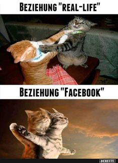 Cat Lovers Community - Your Daily Source of Cat Stories and Funny Cat Memes Funny Animal Jokes, Funny Animal Photos, Crazy Funny Memes, Really Funny Memes, Cute Funny Animals, Stupid Funny Memes, Funny Animal Pictures, Funny Relatable Memes, Haha Funny