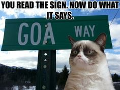 Grumpy Cat Memes memes) - Seriously, For Real? Grumpy Cat Meme, Grumpy Cat Quotes, Cat Jokes, Funny Jokes, Grumpy Kitty, Funny Sayings, Funny Cats, Funny Animals, Cute Animals