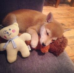 Little pup Kiko loves to curl up on the sofa with her teddies